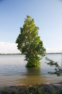 Tree in th River